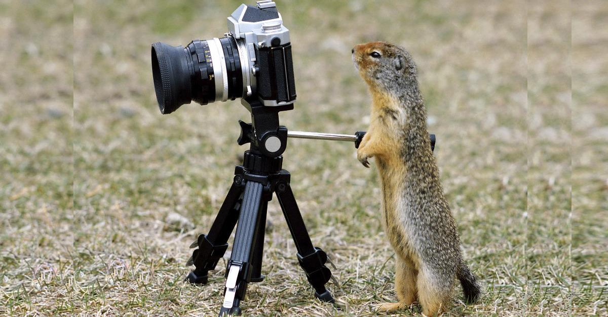 Are Squirrels Taking Aim On Your Garden?