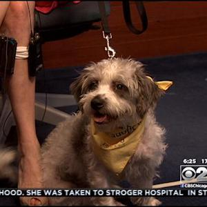 PAWS Pet Of The Week: Fresca