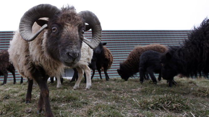 Ewes-ful: Paris hires sheep to mow city lawns