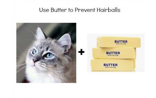 Use Butter to Prevent Hairballs