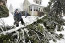 Gary Peterson uses a chainsaw to de-limb a large spruce tree that was toppled by strong winds during a snowstorm in Duluth