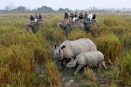 Tourists riding on elephants photograph a rhinoceros with her calf at the Kaziranga National Park in Indias northeastern state of Assam. A continuing decline in the quality of the rhino&#39;s habitat will affect the long-term survival of some of the smaller populations, according to a report by the International Union for Conservation of Nature (IUCN)