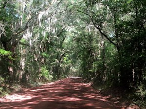 A dirt road leads to the Angel Oak on Johns Island…