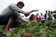 Former Maoist soldiers attend an agriculture class at the Jiri Technical Institute. These former rebels are among thousands of Maoists offered a new start after living in UN-monitored camps for five years when peace was declared