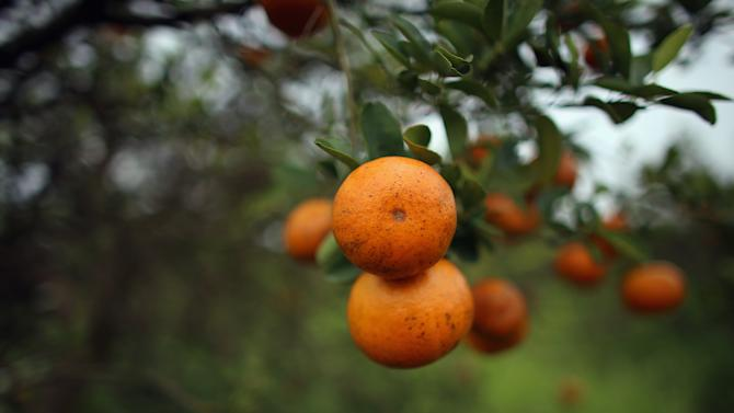 A South African farmworker was found dead after being badly hit by oranges, paramedics said