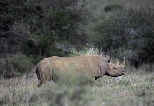 A US hunter who paid $350,000 to kill a black rhinoceros …