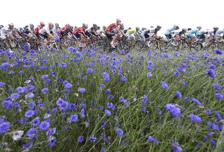 The pack of riders cycles on its way during the 194 km sixth stage of the Tour de France cycling race from Arras to Reims