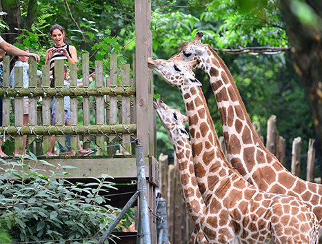 Katie Holmes, Suri Cruise Feed Giraffes at the Bronx Zoo
