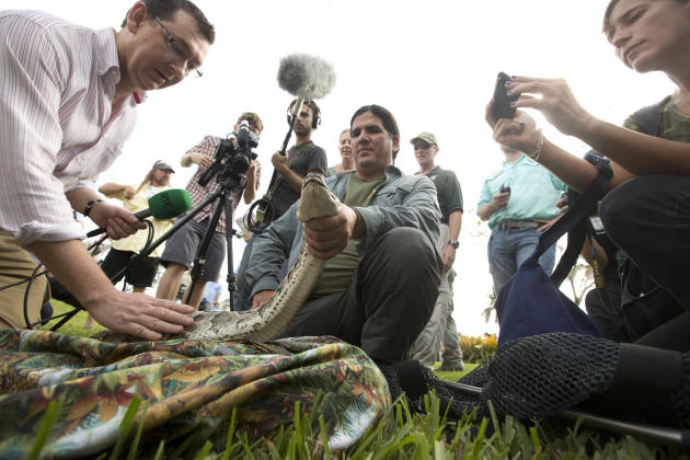 TV crews pet and take photos as Capt. Jeff Fobb from the Miami-Dade Fire Rescue's Venom Response Unit, holds a python during the kick-off ceremonies for the Florida Fish and Wildlife Conservation Comm