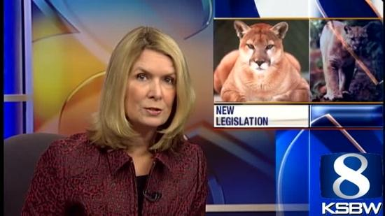 Mountain lion legislation