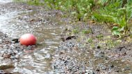 Saturday was another washout for apple picking in New Brunswick.