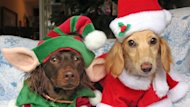 'GMA' Gift Guide: Holiday Gift Ideas for Man's Best Friend (ABC News)