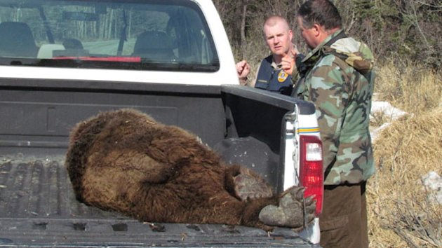Alaska Man Fights Off Bear, Walks Away with Minor Injuries (ABC News)