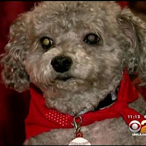 Only On 2: Pet Owner Wants Groomers Licensed After Her Dog's Tongue Is Partially Cut Off