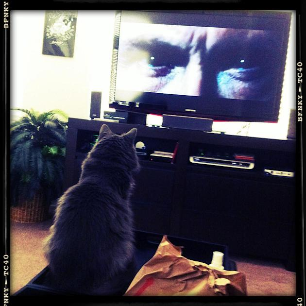 2. Cat Loves Harry Potter