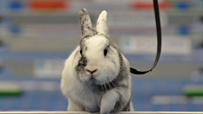 First European Rabbit Hopping Championships