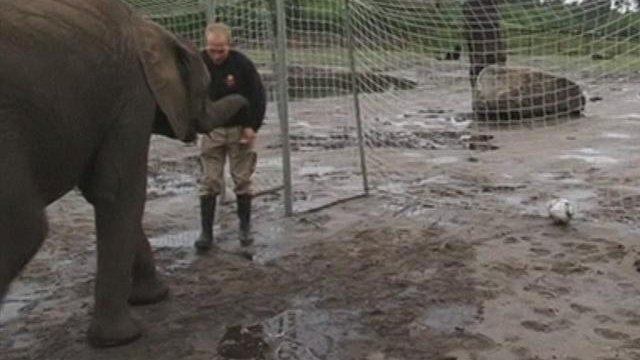 German elephant predicts Champions League winner