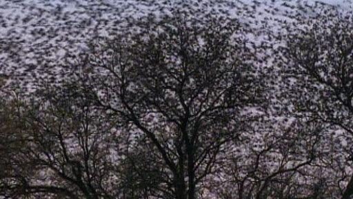 Weird Nature: Giant Animal Swarms