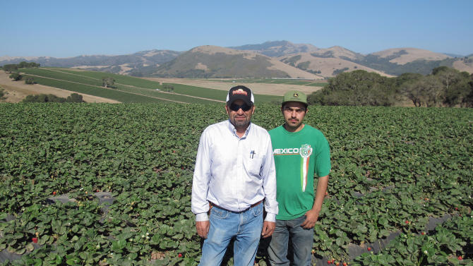 In this photo taken July 9, 2012, Alejandro Ramirez, left, and his son Alejandro Jr., right, pose among the family's hundred acre strawberry field in Salinas, Calif. Ramirez is part of a quiet cultural revolution that has changed the face of the $2.3 billion strawberry industry in California, where most growers today are Latino, a rare occurrence in the world of farming, where most growers of other crops are white. (AP Photo/Gosia Wozniacka)