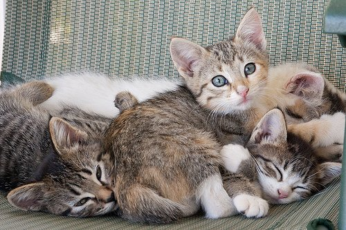 Curious Pile of Kittens