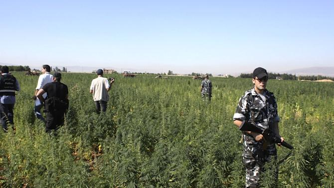 FILE - In this Monday, June 27, 2011 file photo, anti-drug policeman stand guard as workers on tractors uproot cannabis plants in a field in the eastern city of Baalbek, Lebanon. Lebanon's police forces are mistreating and torturing people including drug users, sex workers and homosexuals, an international human rights group said in a report released Wednesday. (AP Photo, File)