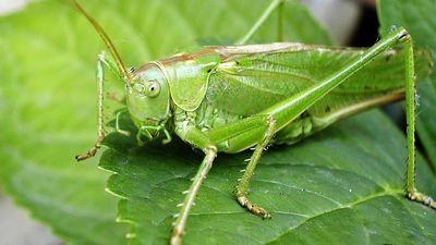 Woman Allegedly Planted a Cricket in Her Food to Get a Free Meal