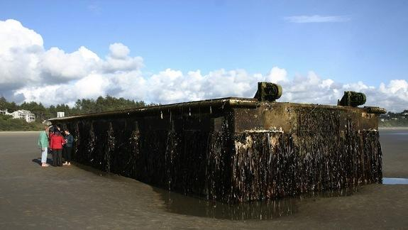 100 Tons of 'Alien' Sea Life Wash Up With Tsunami Dock