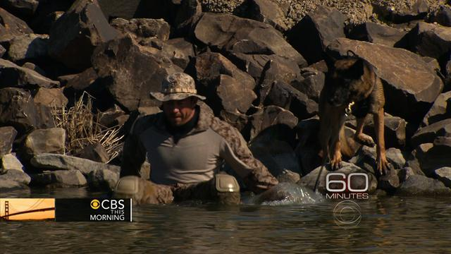 """60 Minutes"" gets rare look at America's Special Ops dogs"