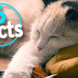 Top 5 Fascinating Facts about Sleep