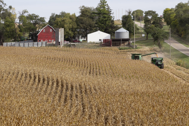 This Sept. 20, 2012 photo shows corn being harvested at Duane Braesch&#39;s farm in Bennington, Neb. Braesch&#39;s cornfields are prime evidence of how unforgiving the elements have been for him and so many others across the Midwest this summer. (AP Photo/Nati Harnik)
