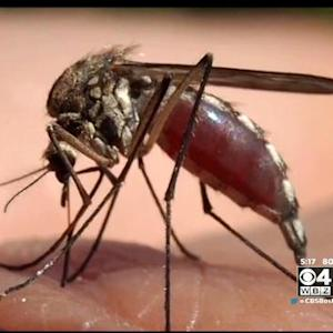 Doctors Give Tips To Prevent Mosquito Borne Diseases