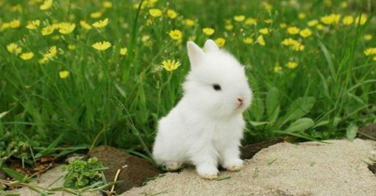 27 Unbelievably Cute Bunnies