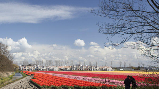 Tourists admire fields of blossoming tulips near Noordwijk, western Netherlands, Sunday April 22, 2012. Holland is the world's main producer of commercially sold tulip plants, producing as many as 3 billion bulbs annually, about two thirds are for export. (AP Photo/Peter Dejong)