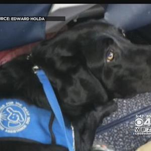 Pets On Planes Make Difficult Air Travel For Passengers With Allergies