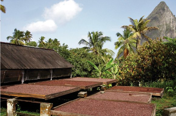 You can find after-dark zip-lining and self-picked chocolate in St. Lucia. (Photo: Hotel Chocolat)