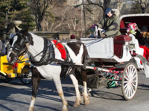 Mayor's Horse Carriage Plan Fails After Key Ally Backs Out