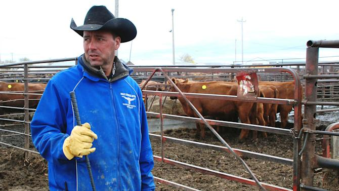 S. Dakota ranchers vow to survive cattle disaster