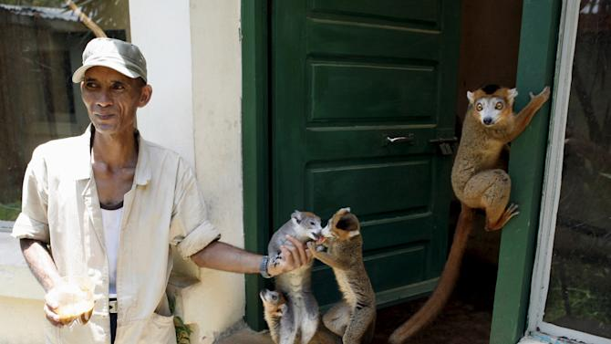 File photo of a caretaker feeding lemurs at Antananarivo's Tsimbazaza Zoo in Madagascar
