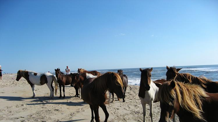 Assateague National Seashore: Tranquility and Swimming Ponies