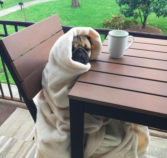 17 Times You and Doug the Pug Were One