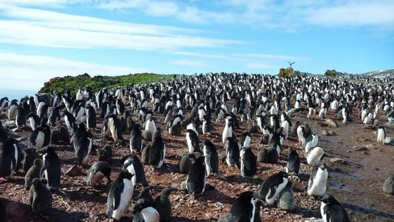 'Critter Cam' Reveals Secrets of Penguin Hunts
