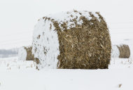 In this Dec. 28, 2012 photo, Bales of corn stalks are covered with a dusting of snow near La Vista, Neb. Despite getting some big storms in December, much of the U.S. is still desperate for relief from the nations longest dry spell in decades. And experts say it will take an absurd amount of snow to ease the woes of farmers and ranchers. (AP Photo/Nati Harnik)