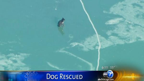 CPD Marine Unit talks after dog rescued on lake