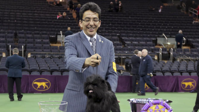 Handler Ernesto Lara poses for photographers with Banana Joe, an affenpinscher who won best in show during the 137th Westminster Kennel Club dog show, Tuesday, Feb. 12, 2013, at Madison Square Garden in New York.  (AP Photo/Mary Altaffer)