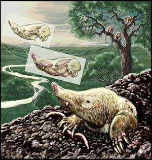 Mystery Molelike Mammal Survived Dino Extinction