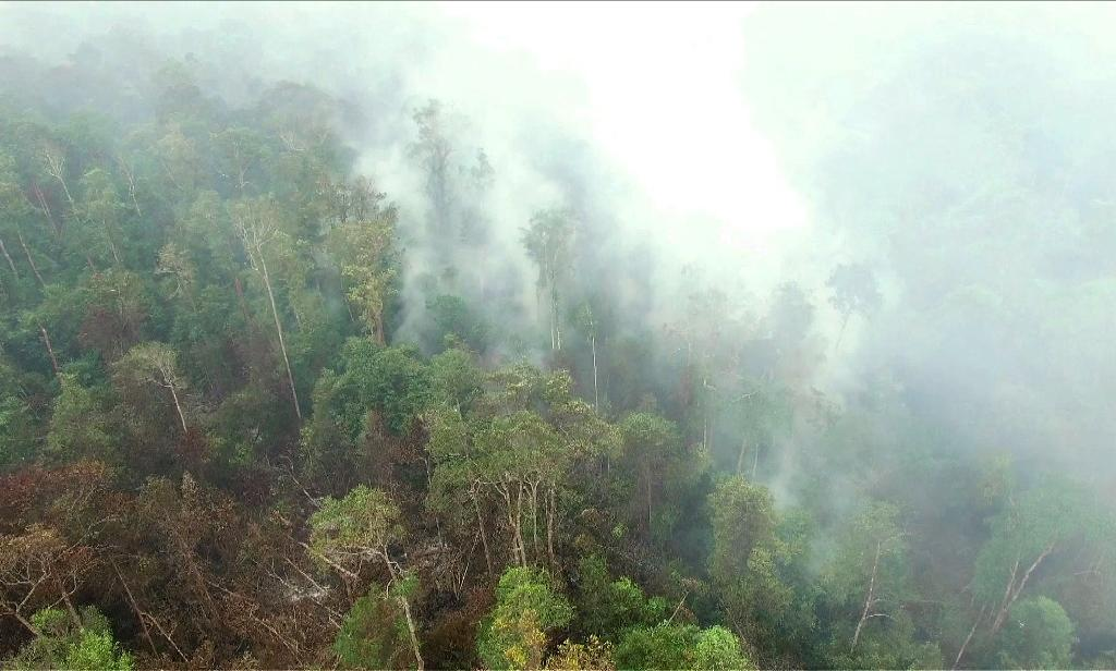 Singapore pressures Indonesia as forest fire footage emerges