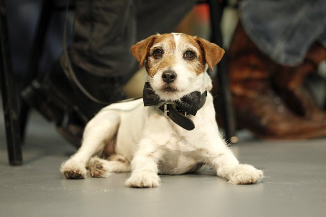 El adorable Uggie