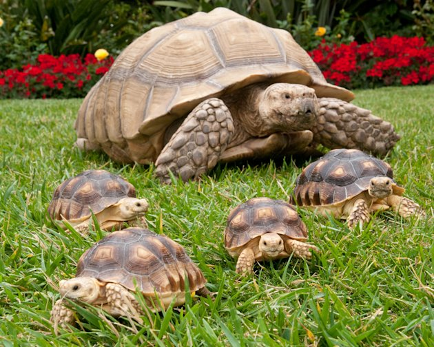 Tortoises At SeaWorld San Diego