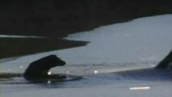 Firefighters rescue dog stuck on icy lake