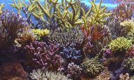 Growing Alarm As Great Barrier Reef Shrinks